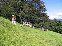 enfant-foret-montagne